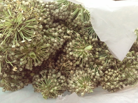 A bag-full of green onion seeds.