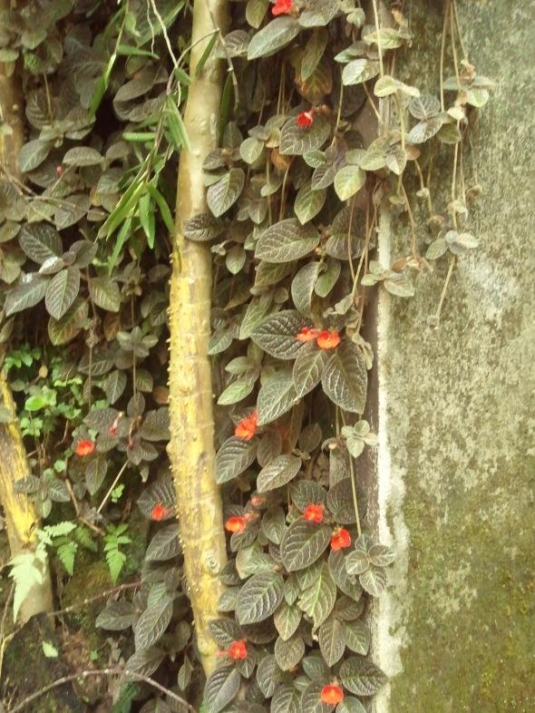 A flowering vine.