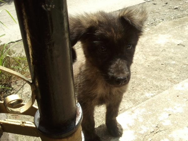 "His name's ""Blackie."" :)"