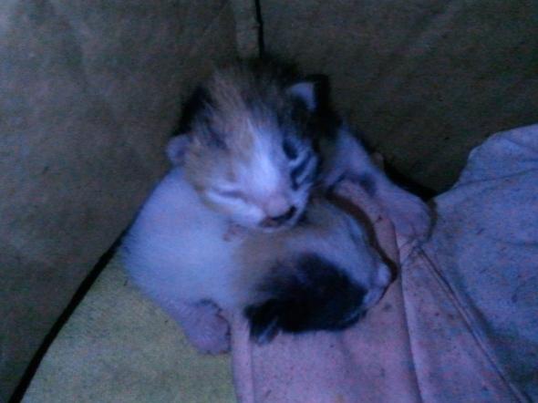 One-week-old kittens.