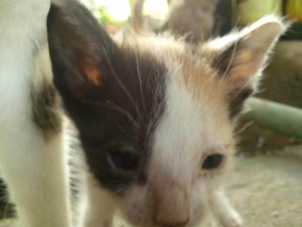 A five-week old kitten.